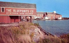 Bluepoints - Oysters and Clams