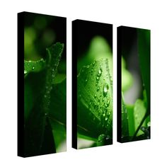 Green Pearl by Philippe Sainte-Laudy Photographic Print 3 Panel Art Set