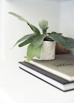 create your own mini succulent clay planter | DIY on coco kelley