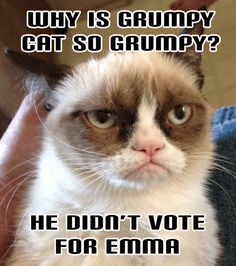 New funny memes sarcastic puns grumpy cat 56 Ideas Grumpy Cat Quotes, Funny Grumpy Cat Memes, Funny Animal Jokes, Funny Animal Pictures, Funny Cats, Funny Animals, Funny Memes, Grumpy Cats, Meme Pictures
