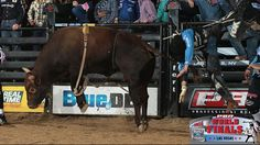 Professional Bull Riders - In the Bull Pen: World Finals. By: Slade Long November 01, 2016. Up and In, the ABBI Derby Champion, will buck this week at World Finals. Thursday's Round 2 will showcase the Top 40 bulls in the PBR, including the nine bulls competing for World Champion Bull. Sweet Pro's Bruiser, Pearl Harbor, Air Time, Seven Dust, Crossfire, Cochise, Stone Sober, Sweet Pro's Long John and Hey Jack.
