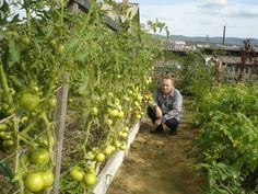 Záhrada Igora Ljadova - OZ Biosféra Growing Vegetables, Rubrics, Permaculture, Vegetable Garden, Fruit, Gardens, Sun, Sour Cream, Farmer