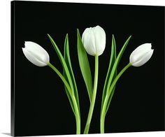 White Tulip Wall Decor