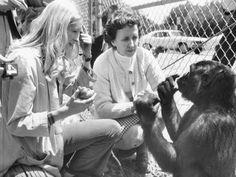 Koko The Gorilla Dies; Redrew The Lines Of Animal-Human Communication : NPR