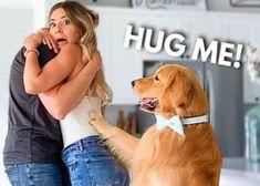 El Golden Retriever celosón más feliz, velcro y famoso de internet Golden Retriever, Internet, Dogs, Happy, Celebs, Animales, Pet Dogs, Doggies
