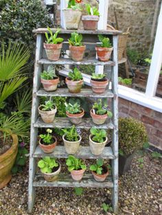 it& not long is it ? I have been on holiday, and out of the garden for a fortnight, and I can see s. Love Garden, Shade Garden, Garden Pots, Back Gardens, Small Gardens, Outdoor Gardens, Plant Theatre, Primula Auricula, Veg Patch