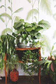 of our favorite house plants on an antique wooden side table - watermelon peperomia and calathea orbifolia + more tropical houseplants in this vignette Interior Garden, Interior Plants, Calathea Orbifolia, Plantas Indoor, Plant Wallpaper, Decoration Plante, Deco Nature, Plants Are Friends, Green Plants