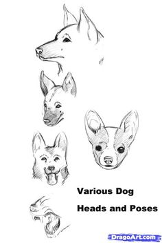 how to draw a realistic dog step 1