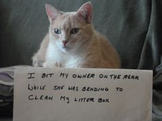 Cat Shaming | Shame Your Pet.  LOL! Look at this kitty's face, he looks like an ass biter!! Lol!!