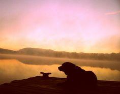 Labrador Sunrise 2