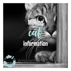 Do you know how cats behave when they are missing? This information will help you. Running Away From Home, Curious Cat, Outdoor Cats, Feral Cats, Hiding Places, Id Tag, Coming Home, Predator, National Geographic