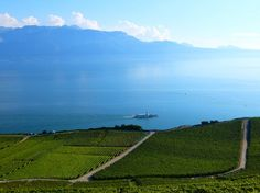 From Le Deck at Chexbres - Vineyards, Lavaux!