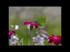 Schmetterlinge im September | Susi Testet und Bloggt