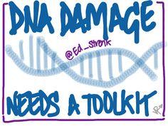 DNA Repair - Ed Miller