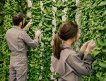 This High-Tech Vertical Farm Promises Whole Foods Quality at Walmart Prices - Bloomberg