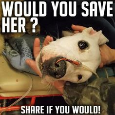 Yes I would you poor puppy