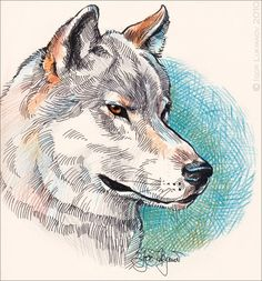 Wolf Drawings | realistic wolf drawing