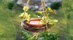 Bebedouro de pássaros no seu jardim: que tal?