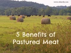 5 Reasons to Eat Pastured Meat - Oh Lardy!