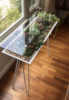 This terrarium table lets you fill furniture with houseplants - Modern Lawn And Garden, Indoor Garden, Indoor Plants, Terrarium Diy, Lizard Terrarium, Orchid Terrarium, Terrarium Centerpiece, Hanging Terrarium, Crassula Succulent