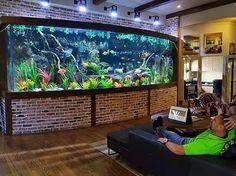 Aquarium Shop, Fish Tank Accessories, Aquarium Supplies and Products Online Tropical Fish Aquarium, Tropical Fish Tanks, Freshwater Aquarium Fish, Aquarium Fish Tank, Marine Aquarium, Aquarium Terrarium, Home Aquarium, Aquarium Design, Aquarium Ideas