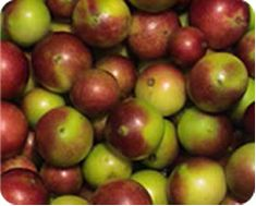 Camu camu (Myrciaria dubia) fruit has astringent, antioxidant, anti-inflammatory, emollient and nutritional properties.