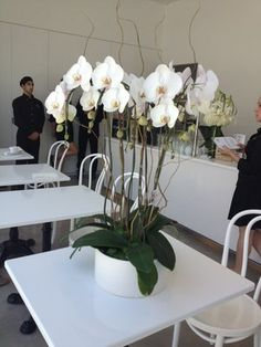 White Phalaenopsis arrangement   Yelp