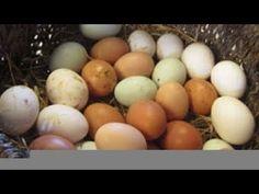 Easter Eggs, Chicken, Breakfast, Food, Medicinal Plants, Breakfast Cafe, Essen, Yemek, Buffalo Chicken
