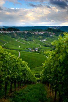 Vineyard in the fall of Stuttgart, Germany, photo by Oleg Milyutin