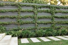 Espalier bougainvillea sp. on wall underplanted with Liriope 'Evergreen Giant'. Travertine steppers in lawn. Woollahra, NSW Australia.  Anthony Wyer + Associates www.anthonywyer.com