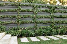 on wall underplanted with Liriope 'Evergreen Giant'… Formal Gardens, Outdoor Gardens, Landscape Design, Garden Design, Espalier, Sydney, Backyard Fences, Landscaping Plants, Back Gardens
