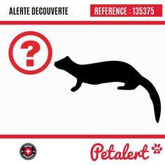 / Furet / Brie-Comte-RobertSeine-et-Marne / France Visible, Aide, Movies, Movie Posters, Calais France, Saint Denis, Ferret, Dog, Animaux