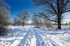 Tinnerö en oas i Linköping! #ic_nature #östergötland #igscandinavia #ig_sverige #ignature #igsweden #igwinter #ig_captures #ig_sweden #ig_landscape #ig_landscape #meralink #linkoping #linköping #vinter #visitsweden #visitlinkoping #vackralinkoping #weekly_ #jonas_fotograf #tv4vädret