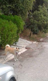 Κυκλοφορεί περιπλανώμενο στην περιοχή Θρακομακεδόνων, οδό Αξιού - Όθωνος