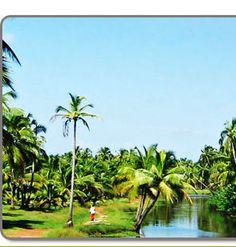 Tours Kerala Kerala Tourism, Tibet, Golf Courses, Tours, India, Plants, Goa India, Plant, Planets
