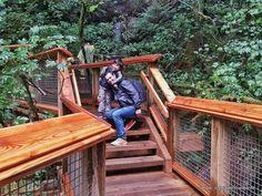 Felipe, o pequeno viajante: Capilano Suspension Bridge Park, em Vancouver…