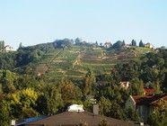 09. Oktober 2013 - Die Weinberge oberhalb Radebeul in Sachsen. Auf dem Weingut Schloss Wackerbarth zeigt sich, was die mehr als 850 Jahre alter Weinbautradition in Sachsen ausmachen und warum das Gebiet auch als Elbflorenz bezeichnet wird.