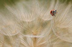 Fernando Ruiz - Portfolio Natural, Fotografía de Naturaleza de Autor