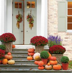 Pile pumpkins with potted mums into decorative fall container garden