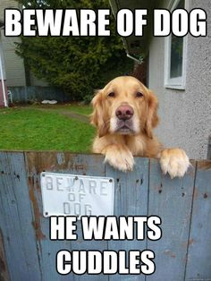 Beware of dog, he wants cuddles.