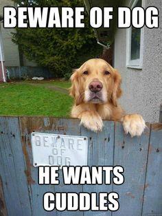 Beware of dog, he wants cuddles.