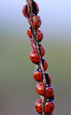 lady bugs at the lady bug picnic!! :)
