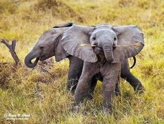 more baby Elephants