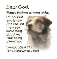 YOU CAN DO SOMETHING!! SHARE - FOSTER - ADOPT