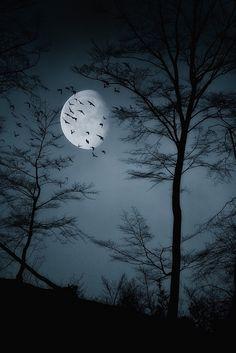 ✯ When Night is Falling .. by Haikus*✯