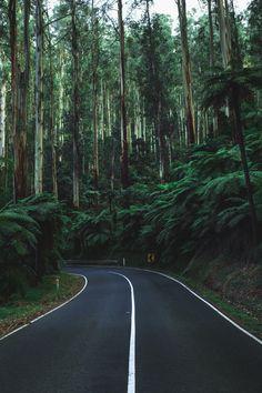 Forest drive   by Ben Blennerhassett