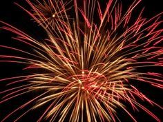 Fireworks Can Scare Your Dog - News - Bubblews