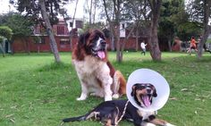 Dogs, Animals, Animals And Pets, Animales, Animaux, Pet Dogs, Doggies, Animal, Animais