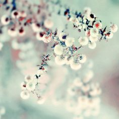 midwinter daydream (by alice b. gardens)