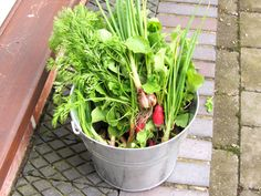 I cannot wait for the bounty of the garden to start up again!   Am doing quite well with buried carrots though and parsnips, beetroot and a variety of salads and leaves that I am foraging - the experiment with the green manure on top of the crops has worked really well.   http://www.rootsshootsandleaves.com/products-page/gardening-workshops/grow-your-own-fruit-and-veg/ Looking forward to more #bucketsfullofgoodness